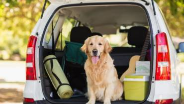 Safe Traveling With Your Four Legged Friend